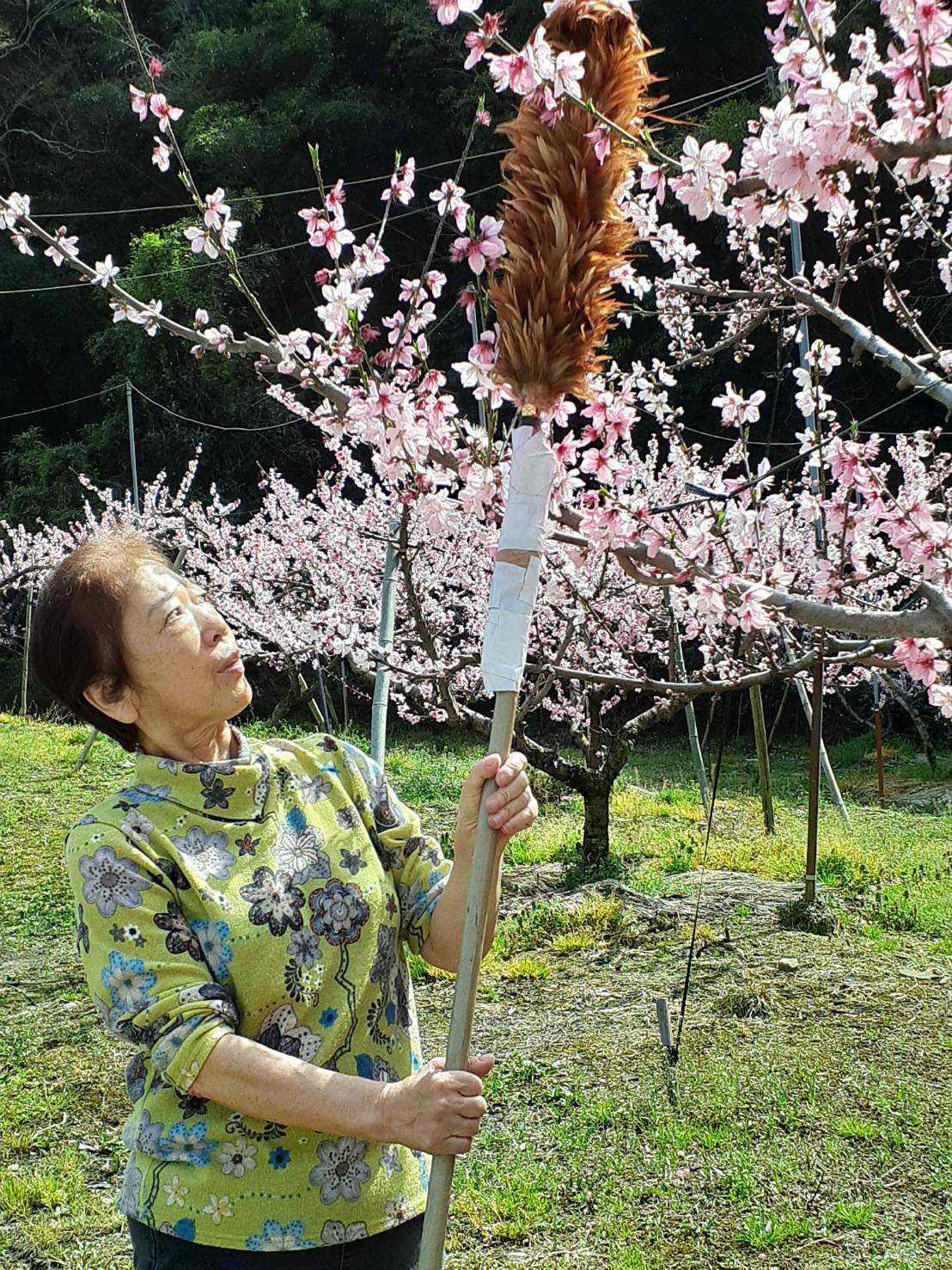 埃取り羽で花粉を付ける