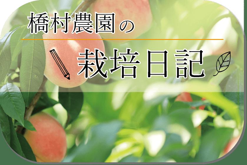 橋村農園の栽培日記